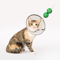 DIY Costumes for Dogs & Cats