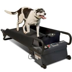 Pet Treadmills on Sale