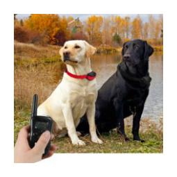 Dog Training Collars
