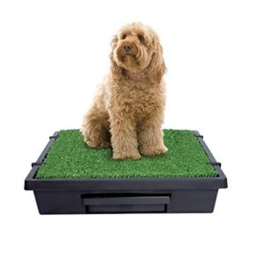 Potty Training Aids for Dogs & Puppies
