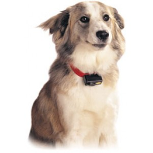 Petsafe Dog Training Collar for Little Dogs